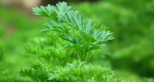 Green Food